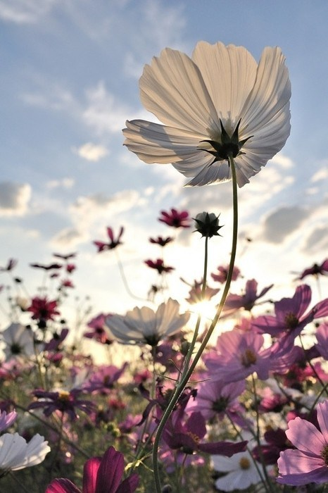 wild-flower-via-pinterest